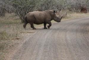09-08-07-15-20-52-FR-Kruger-Park 2776x1851
