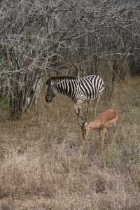 09-08-07-15-28-01-FR-Kruger-Park 2592x3888-112