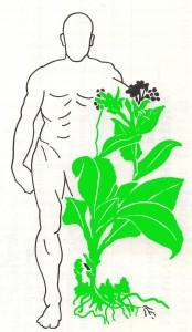 logo plante