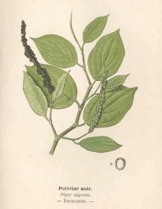 poivrier noir