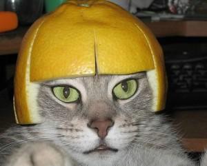 grapefruit-cat