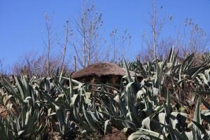 09-08-16-11-18-19-FR-Lesotho - Malealea 3888x2592-173