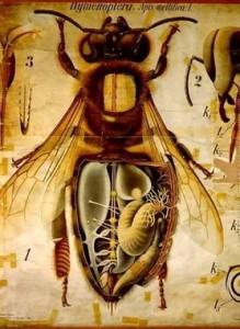 272c8ad3fc037c571392aa2eb985c72b--bee-drawing-bee-keeping